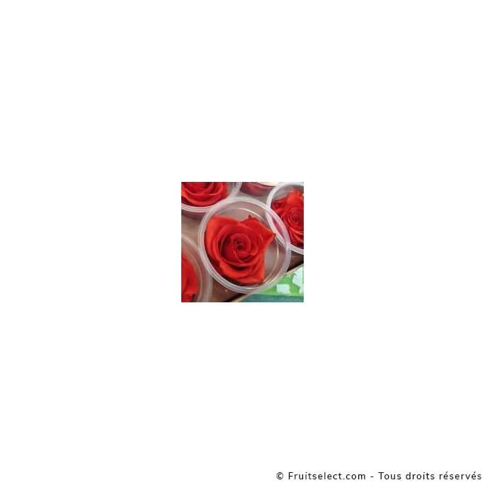 Rose Longue Vie