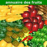 logo 123fruits